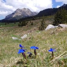Active trekking tour in Bucegi Natural Park and Piatra Craiului National Park - 3 days - Bucegi Natural Park - Spring Gentian