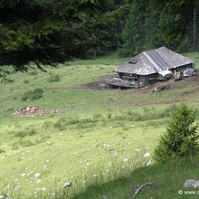 Private Active trekking tour in Piatra Craiului National Park  - 1 day - Sheep farm