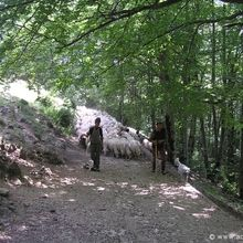 Active trekking tour in National Park Piatra Craiului - 2 days - Shepherds