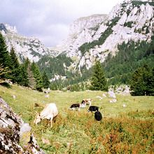 Bucegi Mountains - Gaura Valley