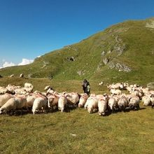 Private Expeditions in Fagaras Mountains - the highest mountains of Romania - Shepherd in Fagaras Mountains