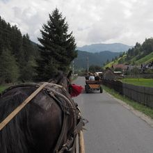 Village life in Transylvanian Carpathian mountains - 8 days - Tour of the village in horse driven carriage in Romania