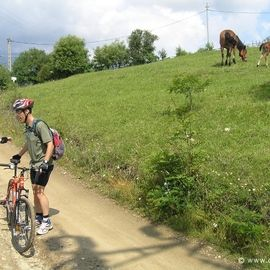 Active mountainbike tour in National Park Piatra Craiului - 1 day