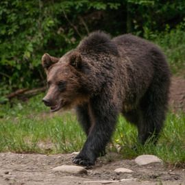 Countryside Photo Tour, Traditional Workshops and Bears Watching Romania