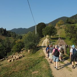 Village life in Transylvanian Carpathian mountains - 8 days