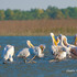 Discover Medieval Transylvania and Danube Delta Small Group Tour - 8 days