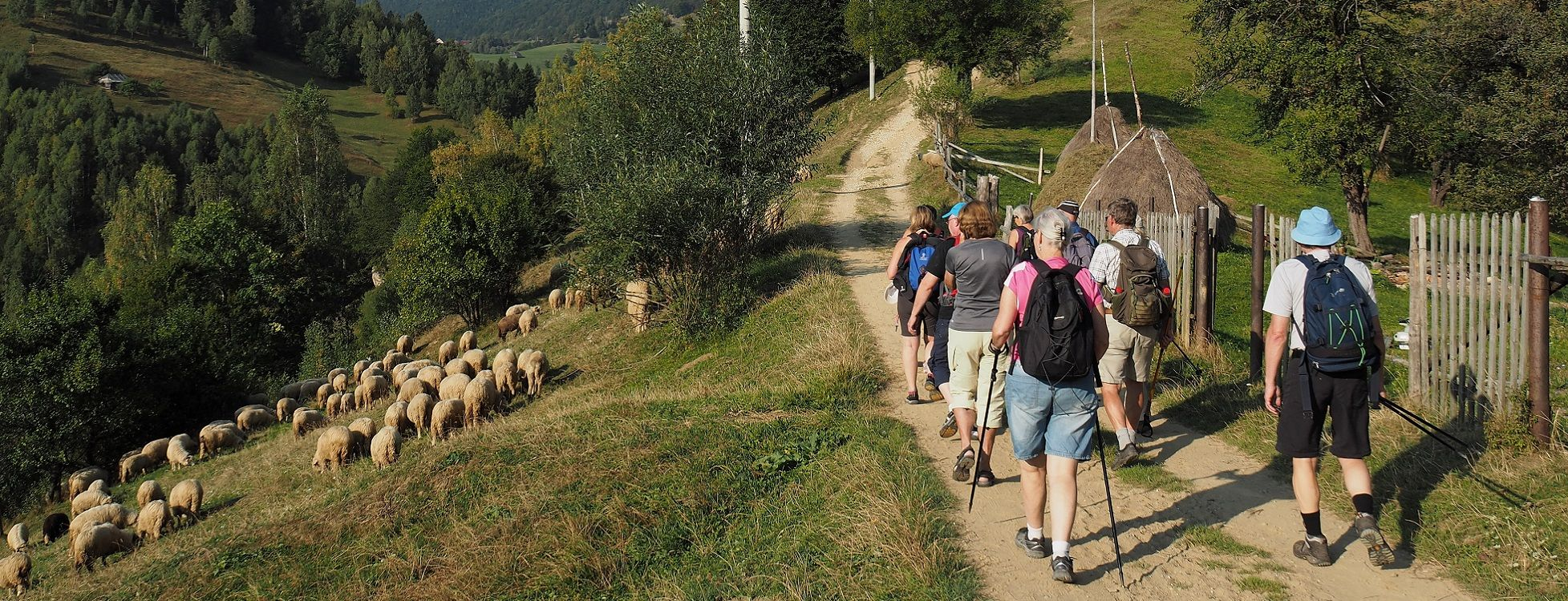 Adventure in Transylvania and Bear Watching - 7 days